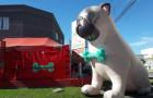 Decoração para Pet Shop - Foto 1